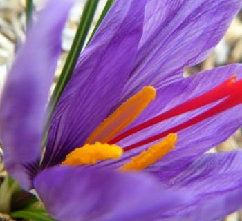 fleur-epice-fleur