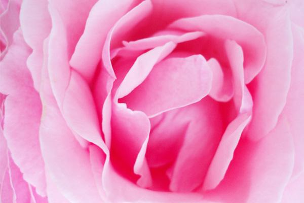 confiture-rose